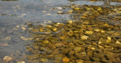 kleine Fische im Aggerstausee