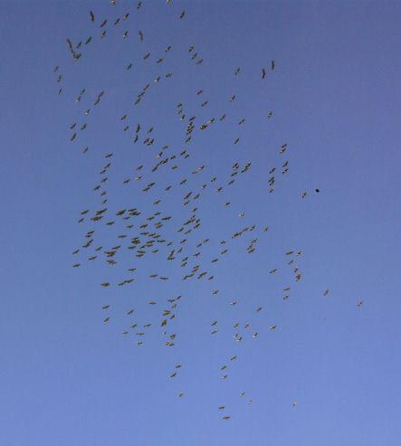 Zugvögel Formation