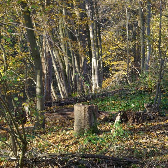 Hier wurden Bäume gefällt