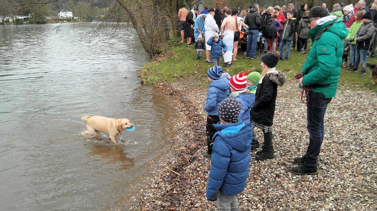 Hund am Ufer