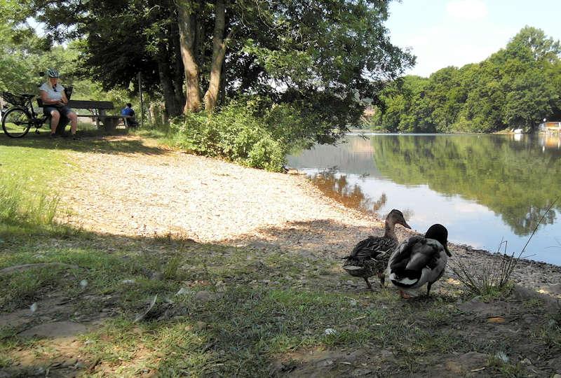 Rast am See mit Enten